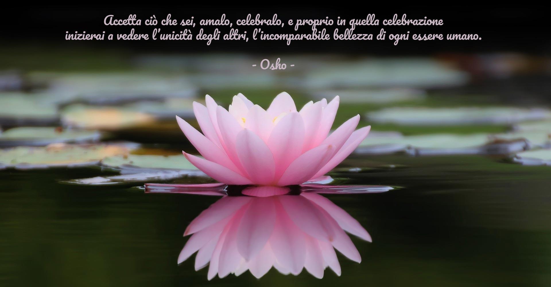 citazione olistica